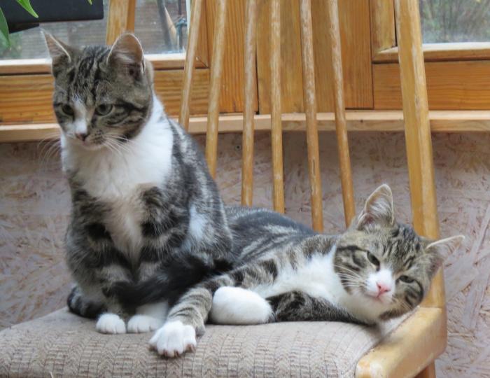 Clarence und Leo