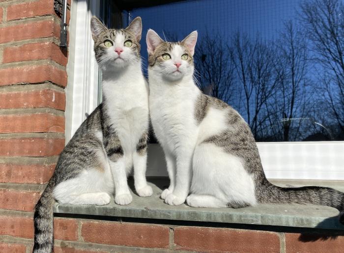 Tobi und Lilly