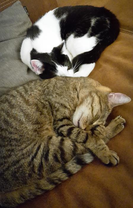 Merlin und Lucy