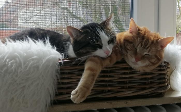 Hugo und Piet